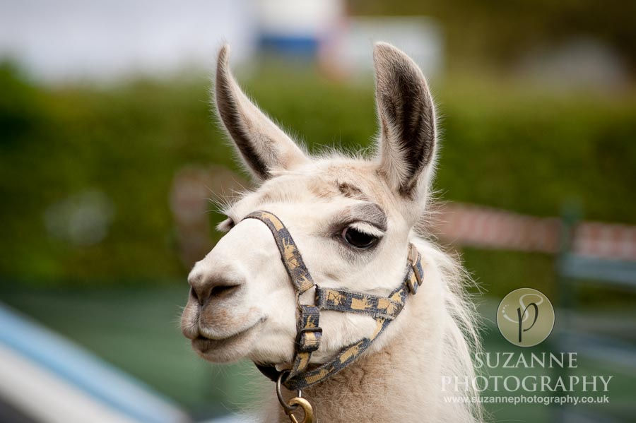 Mirfield Agricultural Show 0020