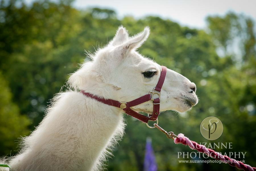 Mirfield Agricultural Show 0046