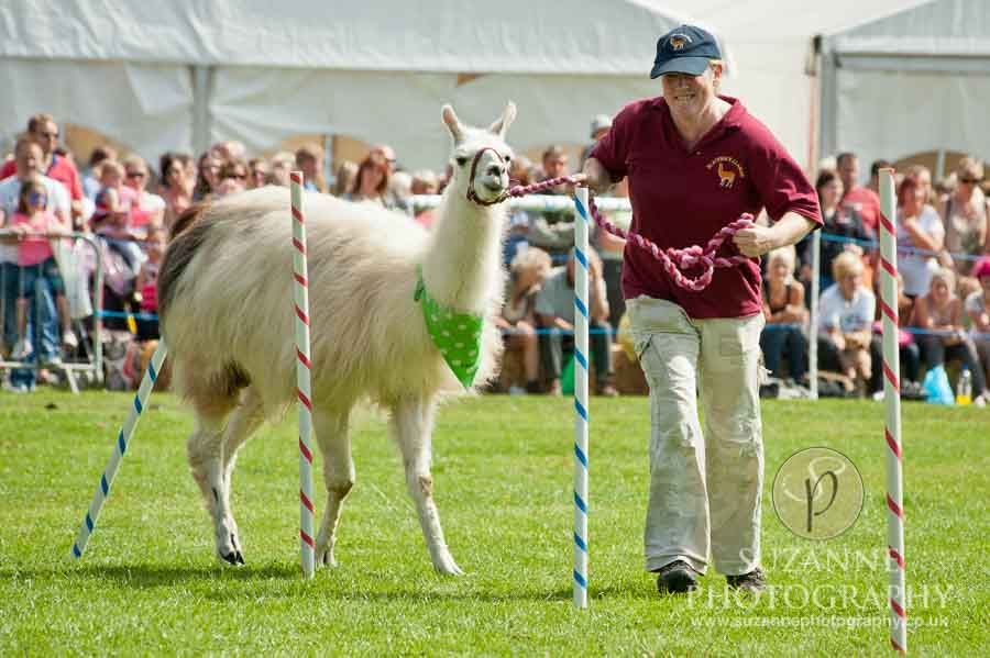 Mirfield Agricultural Show 0051