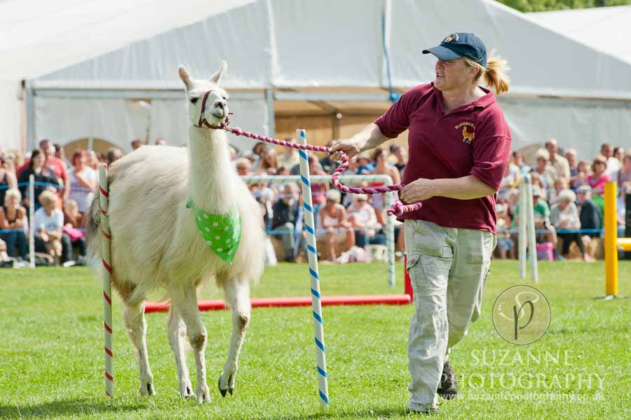 Mirfield Agricultural Show 0052