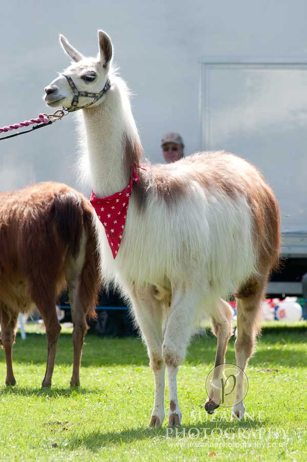 Mirfield Agricultural Show 0054
