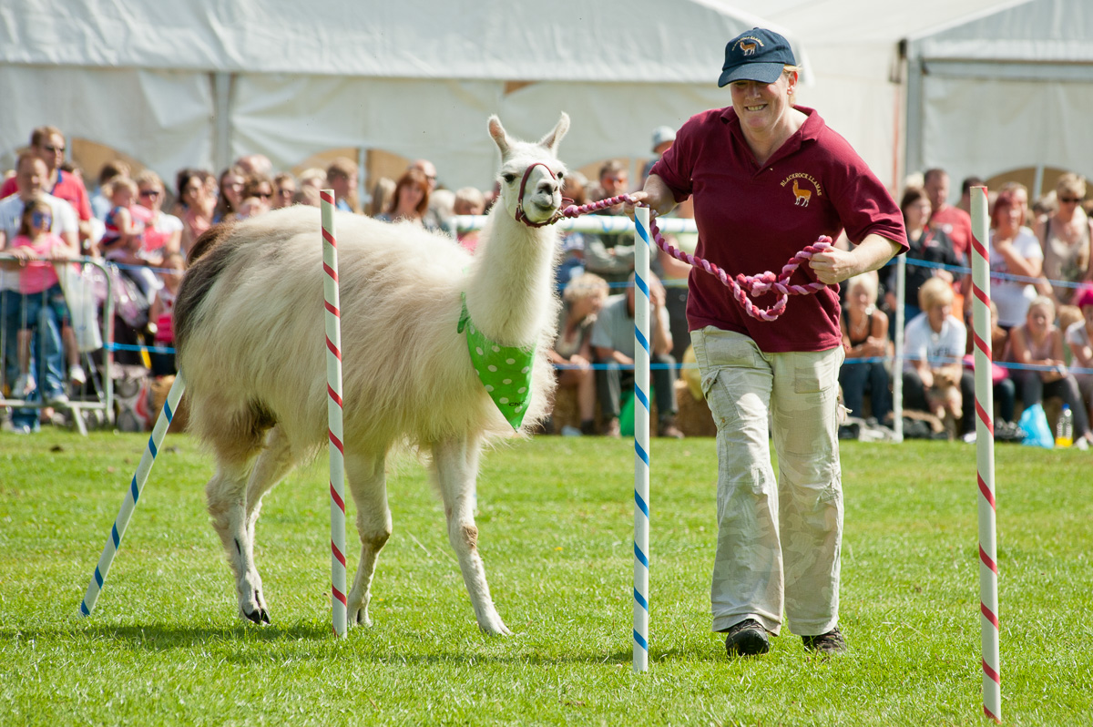Mirfield Agricultural Society Show Event Cover