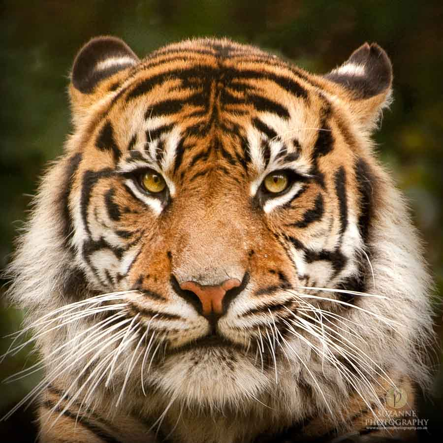 Animals-and-Wildlife-Suzanne-Photography-130