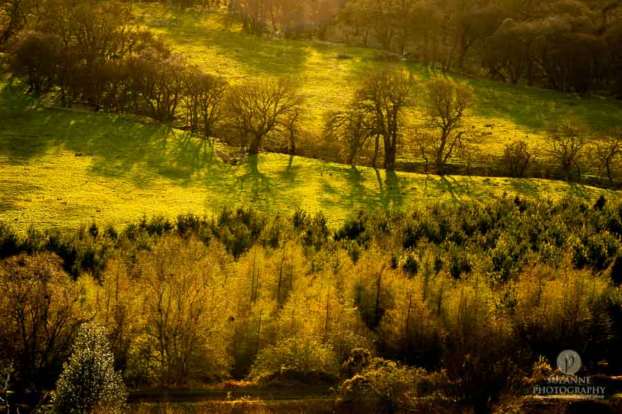 Best-Landscape-Suzanne-Photography-123