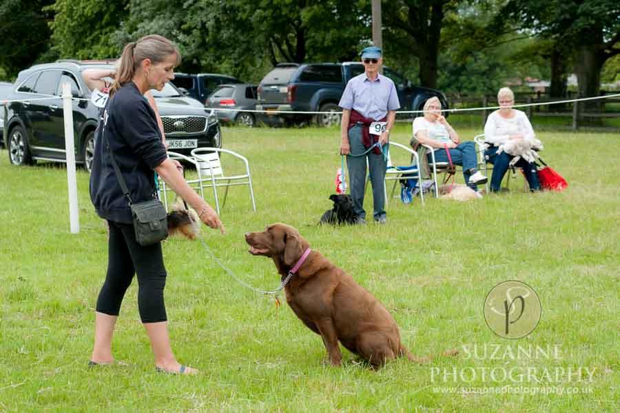 Burton Salmon Dog Show North Lodge 0098