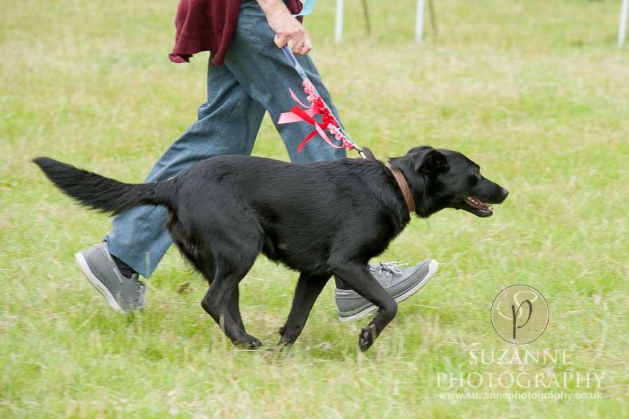 Burton Salmon Dog Show North Lodge 0100