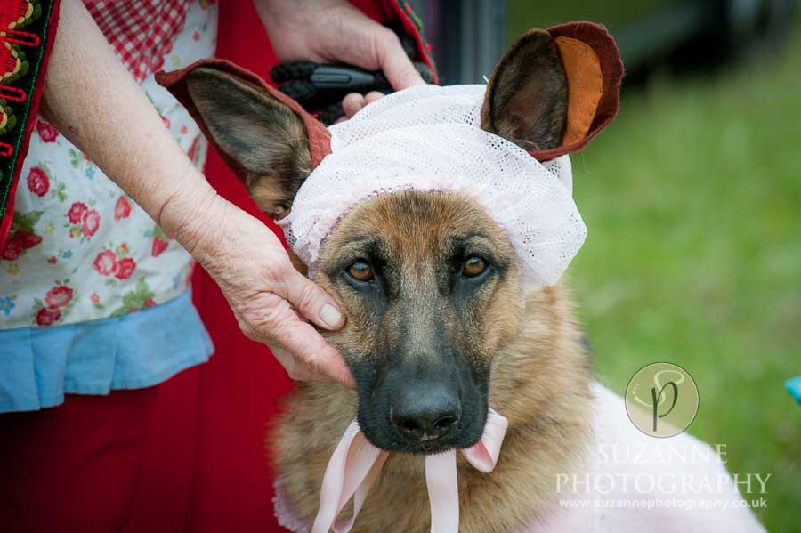 Burton Salmon Dog Show North Lodge 0109