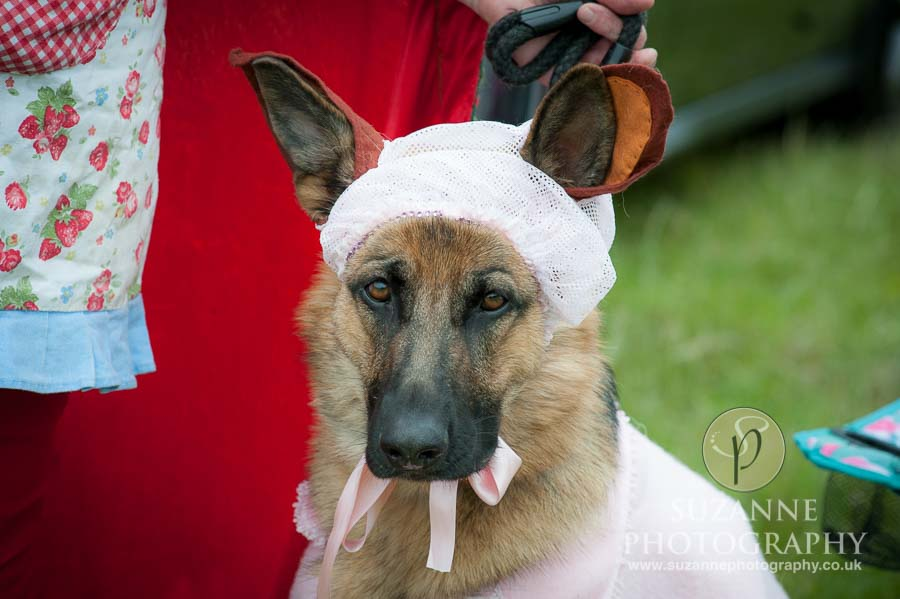 Burton Salmon Dog Show North Lodge 0110