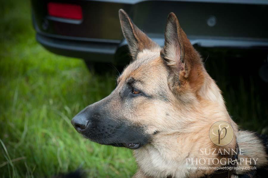 Burton Salmon Dog Show at North Lodge near Knottingley 0004