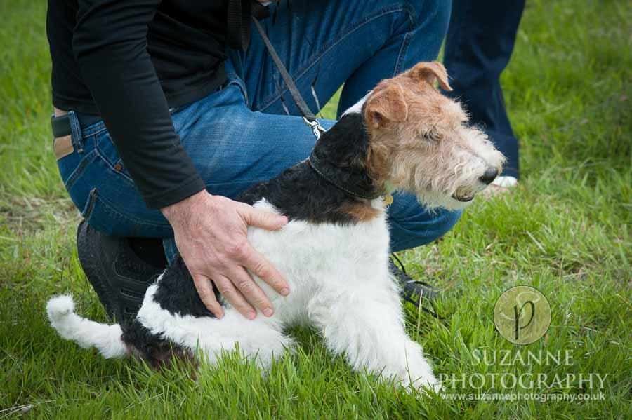 Burton Salmon Dog Show at North Lodge near Knottingley 0008