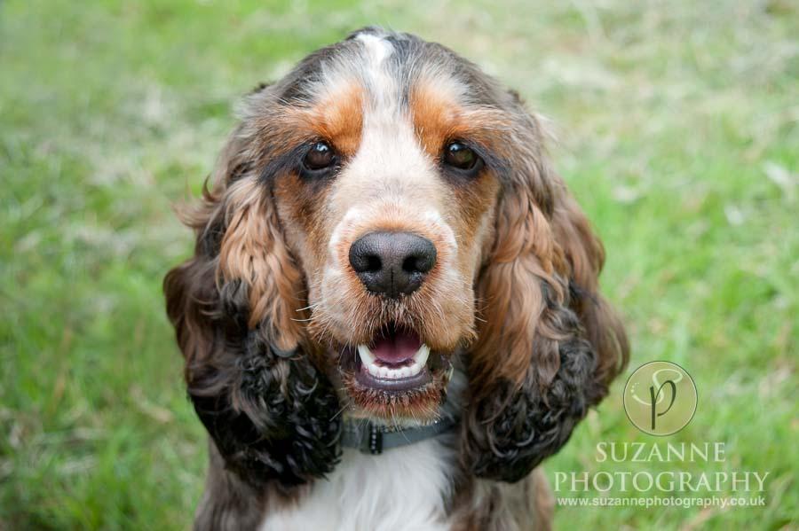 Burton Salmon Dog Show at North Lodge near Knottingley 0034