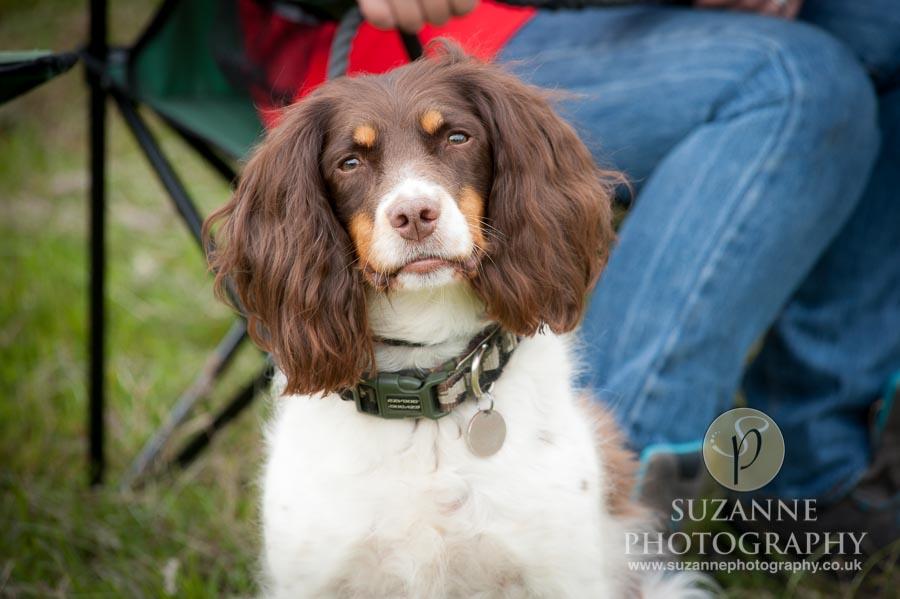 Burton Salmon Dog Show at North Lodge near Knottingley 0043
