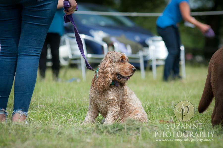 Burton Salmon Dog Show at North Lodge near Knottingley 0064