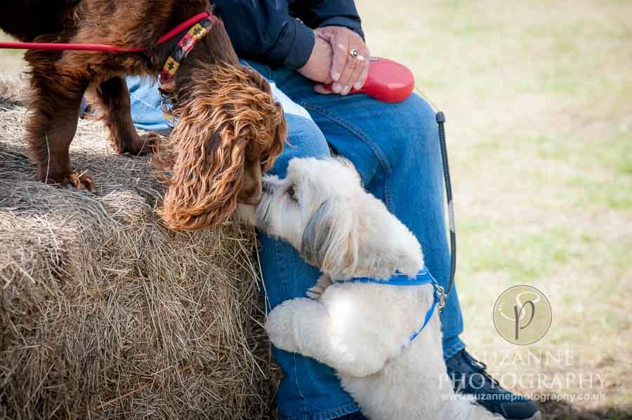 Farmer Copleys Fun Dog Show 0066