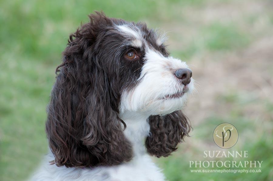 Farmer Copleys Fun Dog Show 0073 C2