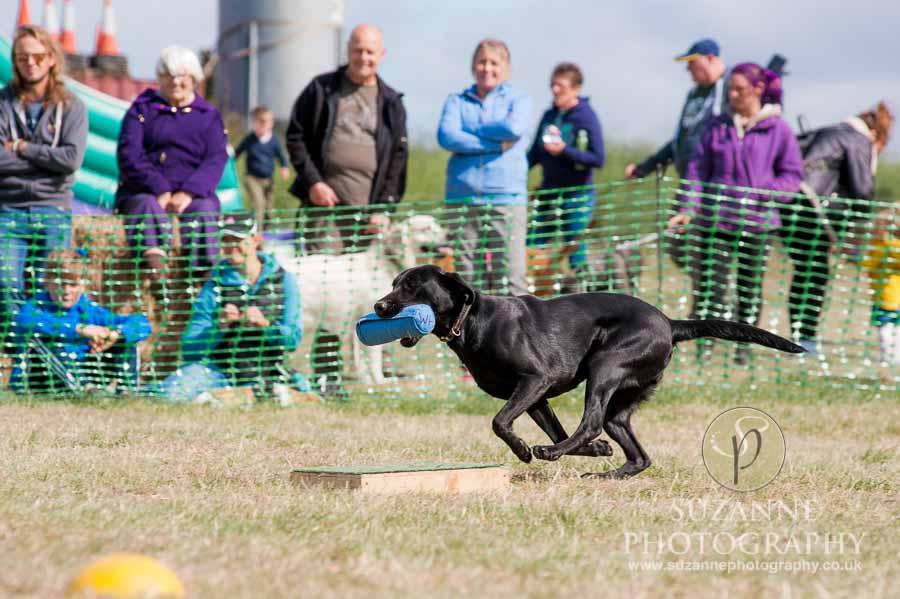 Farmer Copleys Fun Dog Show 0091