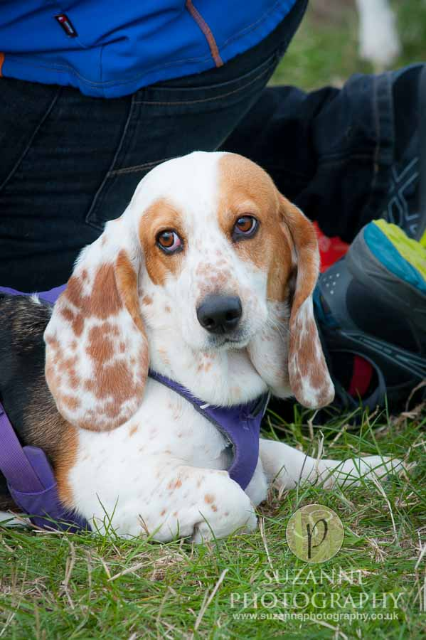 Farmer Copleys Fun Dog Show 0101