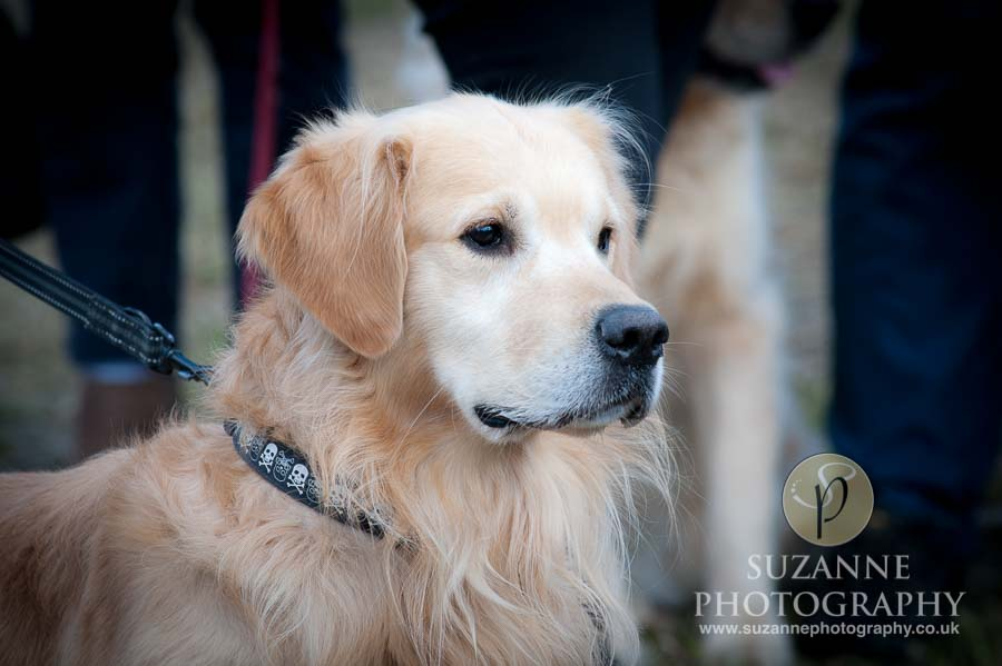 Farmer Copleys Fun Dog Show 0114