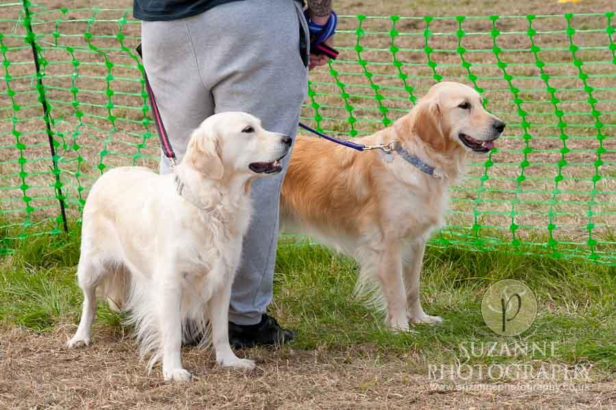 Farmer Copleys Fun Dog Show 0117