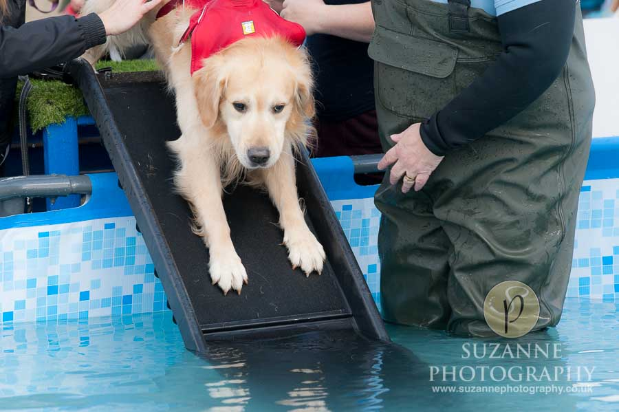 Farmer Copleys Fun Dog Show 0120