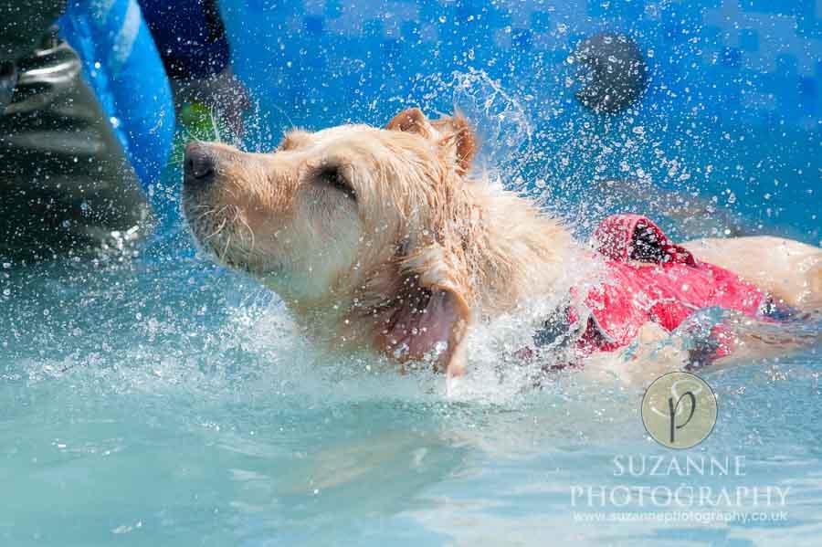 Farmer Copleys Fun Dog Show 0124