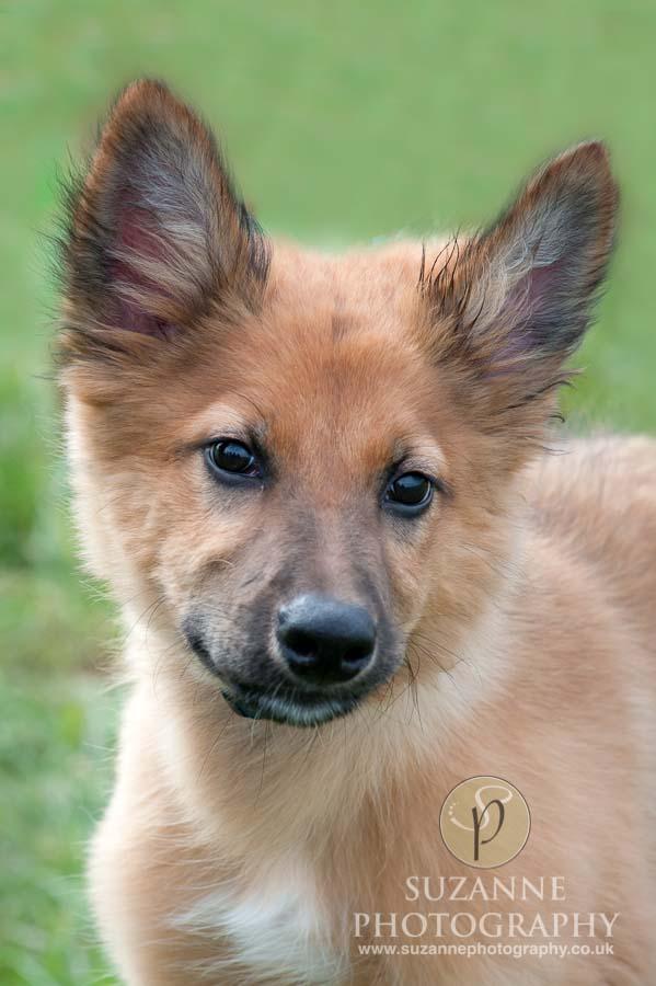 Farmer Copleys Fun Dog Show in Pontefract 0001 C1