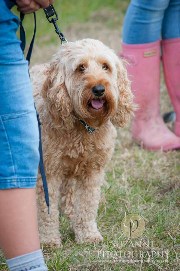 Farmer Copleys Fun Dog Show in Pontefract 0013