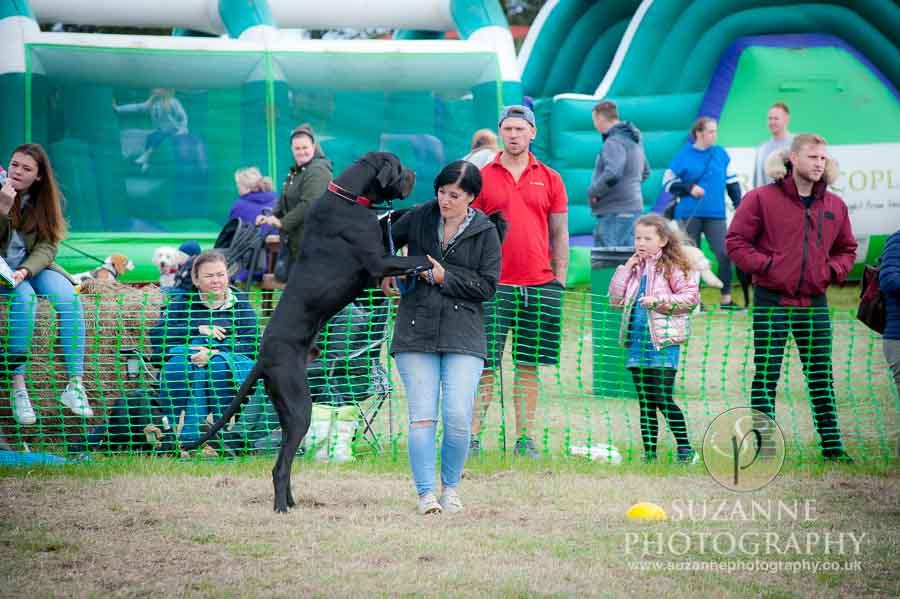 Farmer Copleys Fun Dog Show in Pontefract 0014