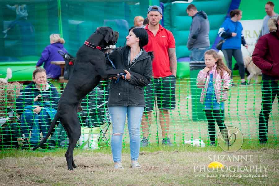 Farmer Copleys Fun Dog Show in Pontefract 0016