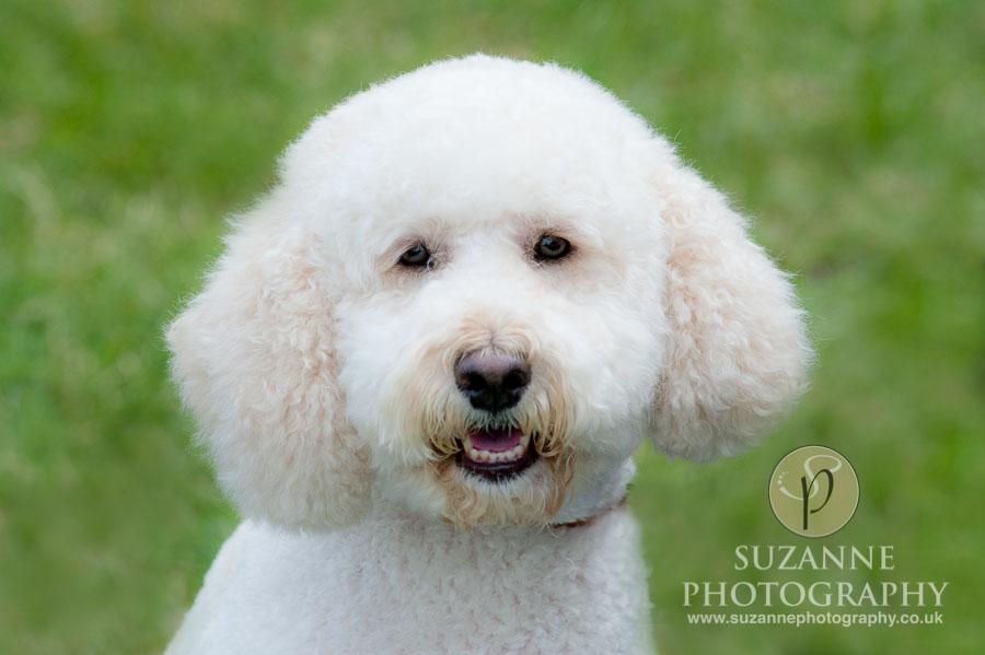Farmer Copleys Fun Dog Show in Pontefract 0020 C1