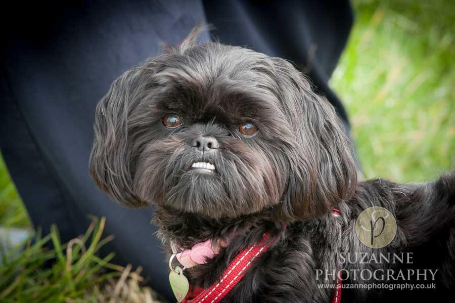 Farmer Copleys Fun Dog Show in Pontefract 0026