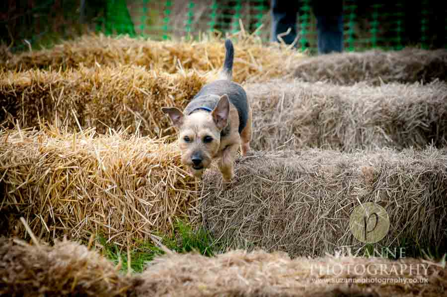 Farmer Copleys Fun Dog Show in Pontefract 0030