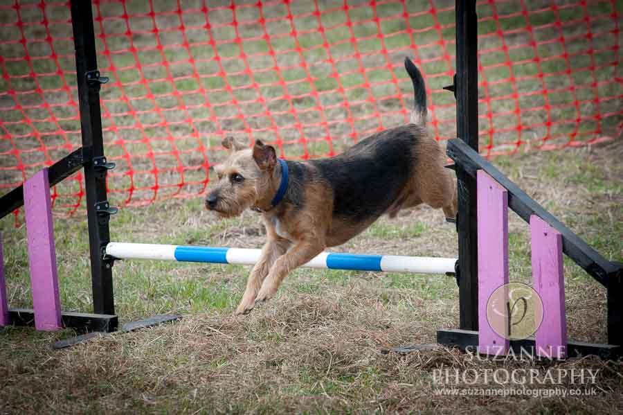 Farmer Copleys Fun Dog Show in Pontefract 0034