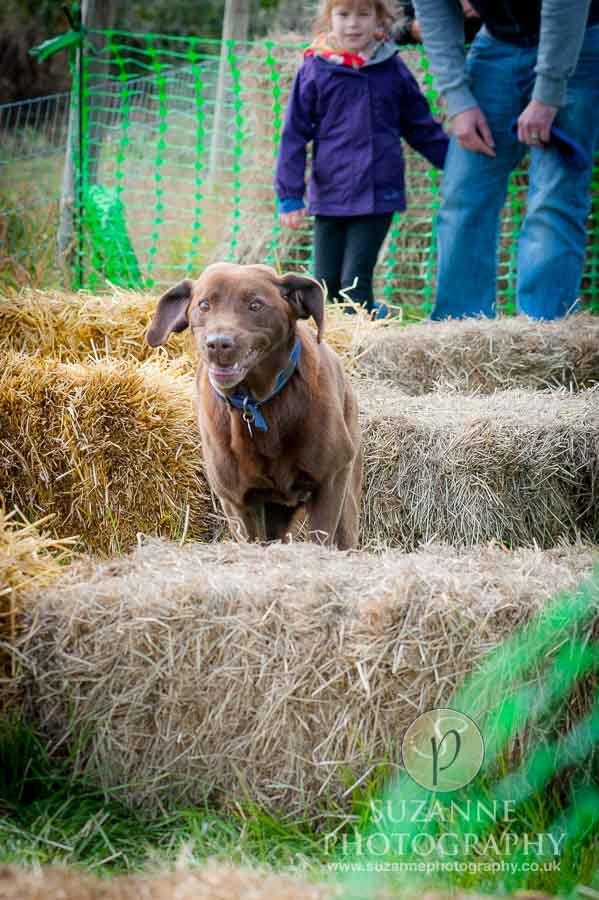Farmer Copleys Fun Dog Show in Pontefract 0036