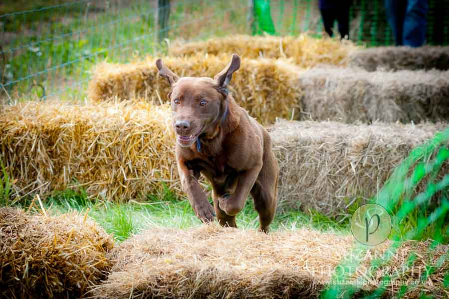 Farmer Copleys Fun Dog Show in Pontefract 0037