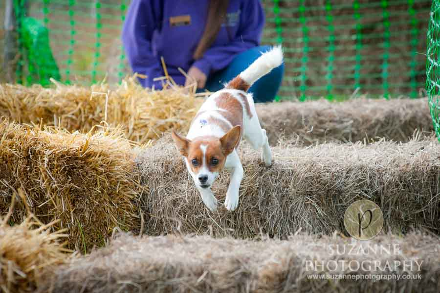 Farmer Copleys Fun Dog Show in Pontefract 0038