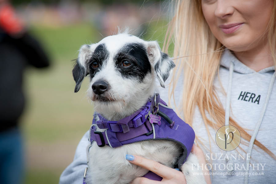 Farmer Copleys Fun Dog Show in Pontefract 0040