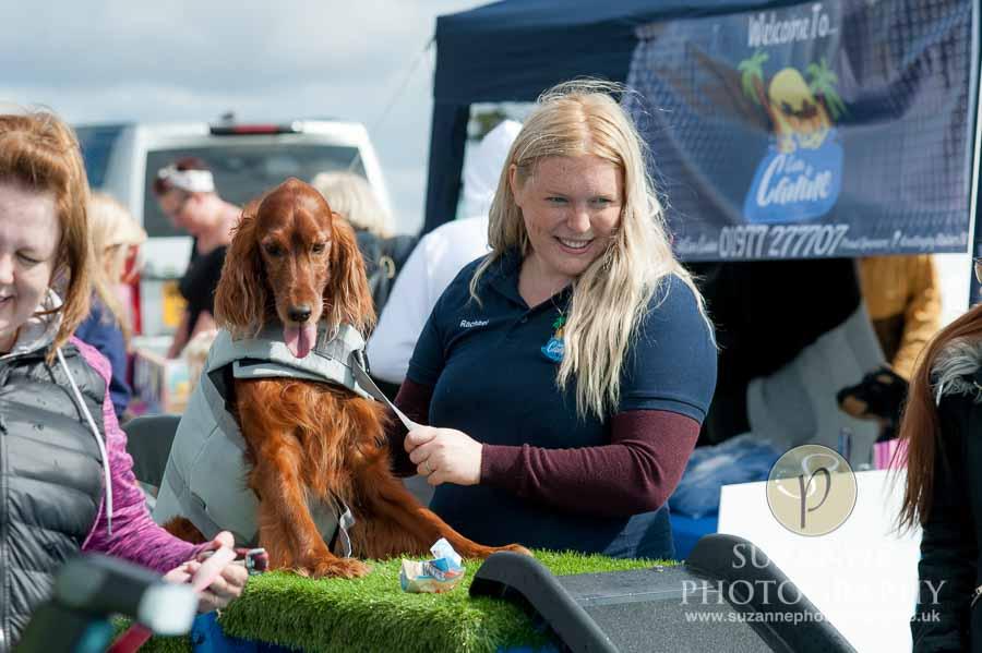 Farmer Copleys Fun Dog Show in Pontefract 0044