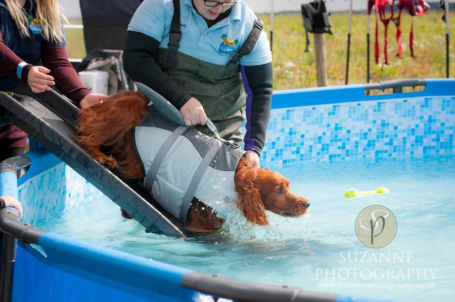 Farmer Copleys Fun Dog Show in Pontefract 0047