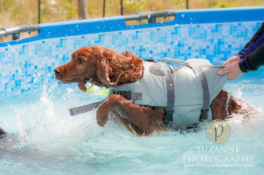 Farmer Copleys Fun Dog Show in Pontefract 0048