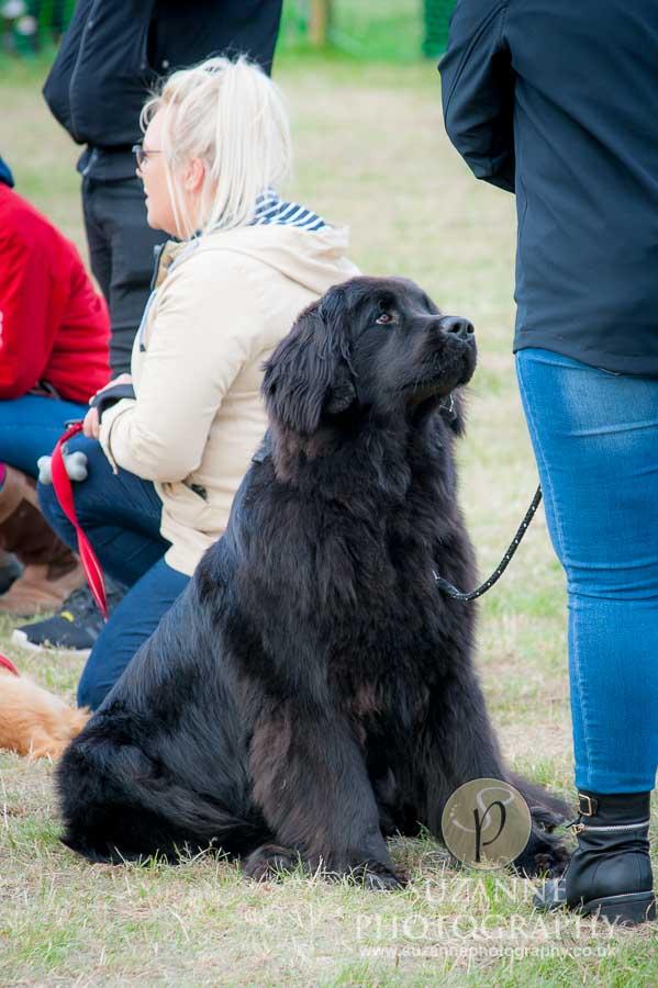 Farmer Copleys Fun Dog Show in Pontefract 0058