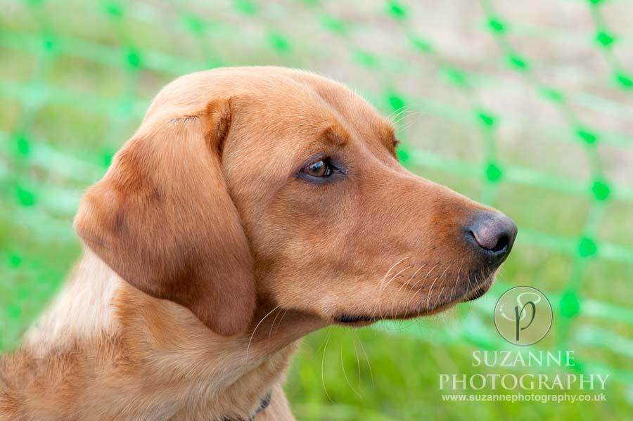Farmer Copleys Fun Dog Show in Pontefract 0061 C1