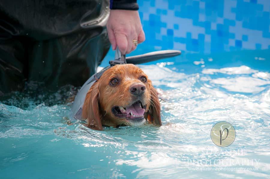 Farmer Copleys Fun Dog Show in Pontefract 0062