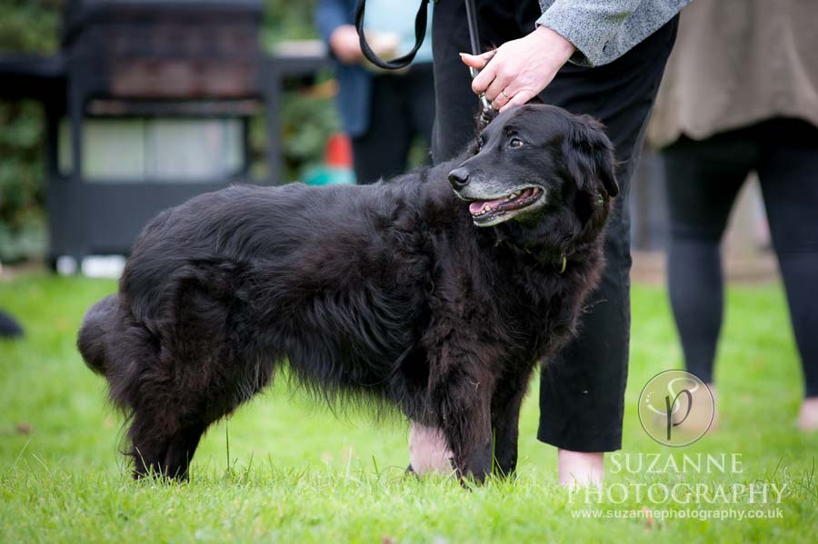Foston and Thornton le Clay Dog Show 0016