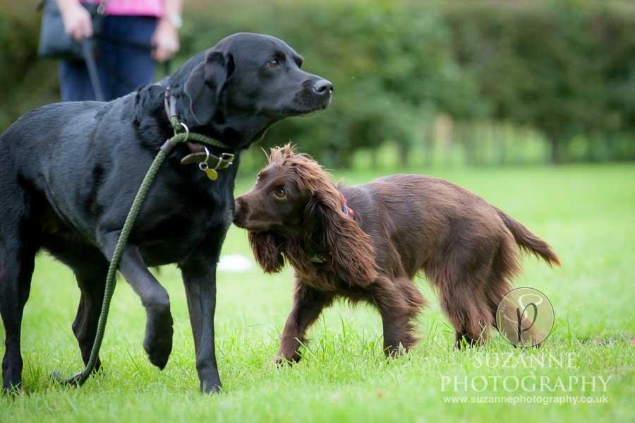 Foston and Thornton le Clay Dog Show 0042