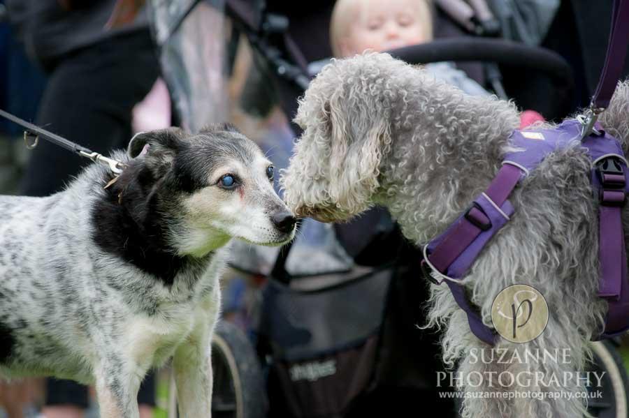 Foston and Thornton le Clay Dog Show 0046