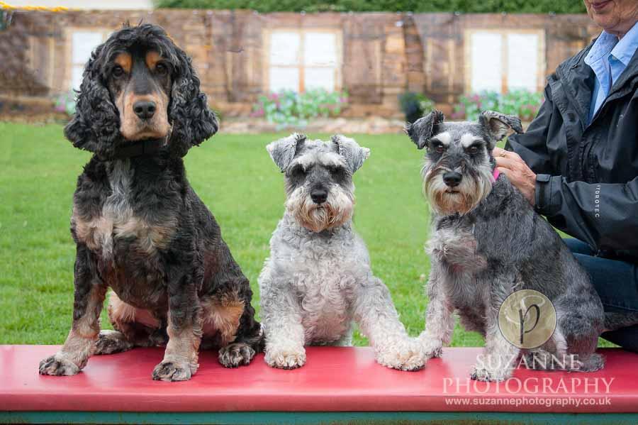Golden Paws Ranch Dog Show York 0017 C1