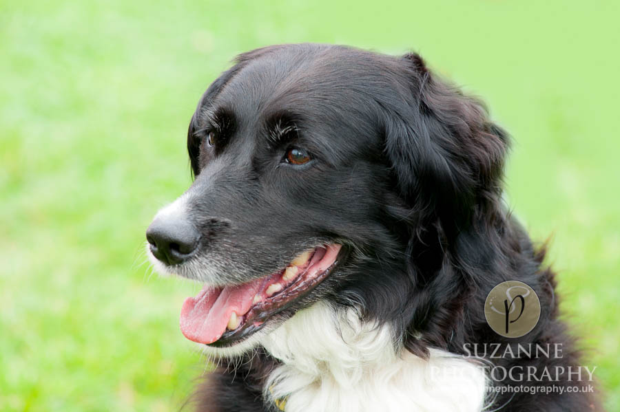 Golden Paws Ranch Dog Show York 0021 C1