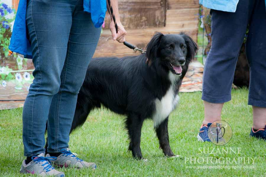 Golden Paws Ranch Dog Show York 0031