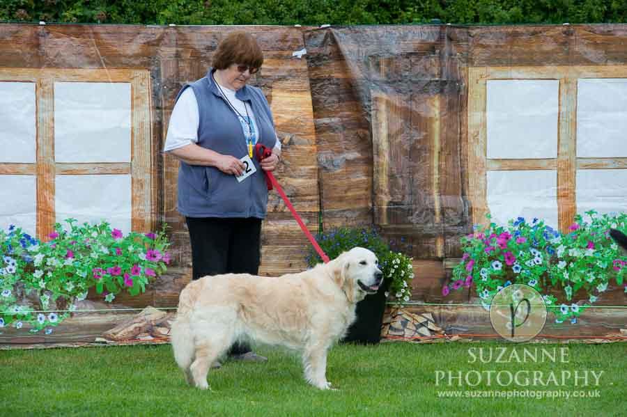 Golden Paws Ranch Dog Show York 0042